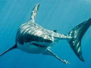 Almost 100 years between fatal Fraser Coast shark attacks