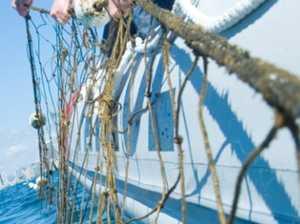 Govt exploring 'shark control alternatives'