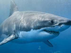 Number of sharks caught in Mackay waters over past 3 years