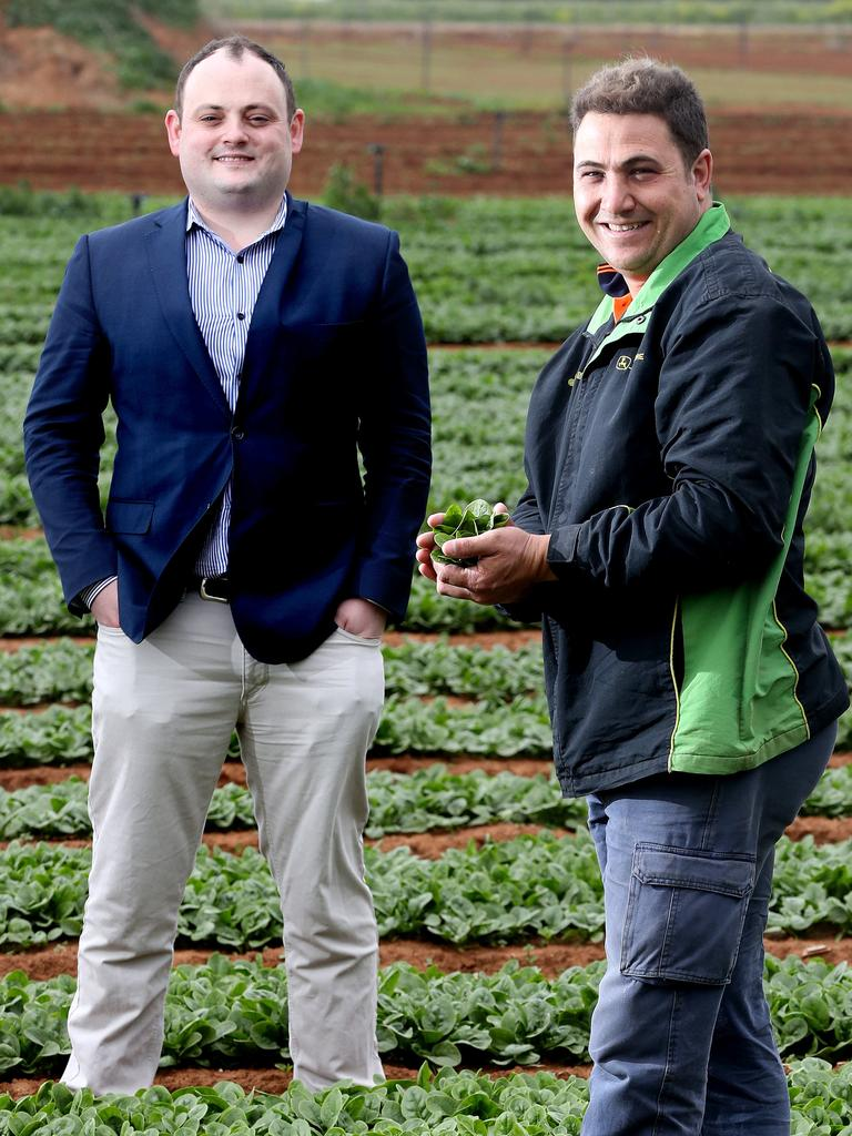 AusVeg SA general manager Jordan Brooke-Barnett, left, with Tony Catanzariti at his Virginia spinach crop, said he hoped the finds did not stop customers supporting South Australian growers. Picture: Calum Robertson
