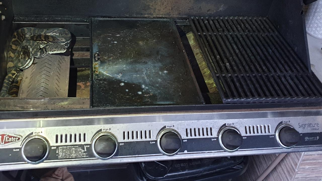 The snake removed curled up in the BBQ. Picture: BRISBANE NORTH SNAKE CATCHERS AND RELOCATION