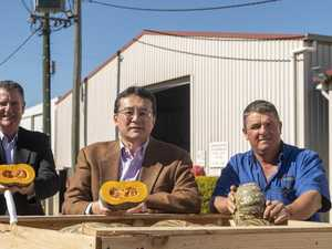 Japanese market going nuts for rare Lockyer pumpkin