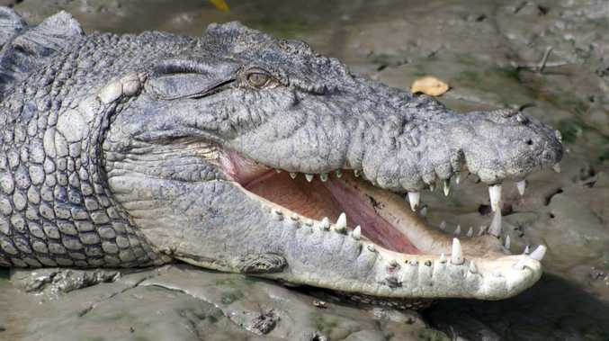 CROC SURVEY: Major air, land and sea search in hot spots