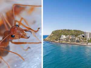 Shock fire ant invasion threatens to close iconic hill