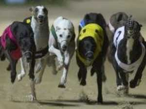 Fields, selections for Rockhampton greyhound races