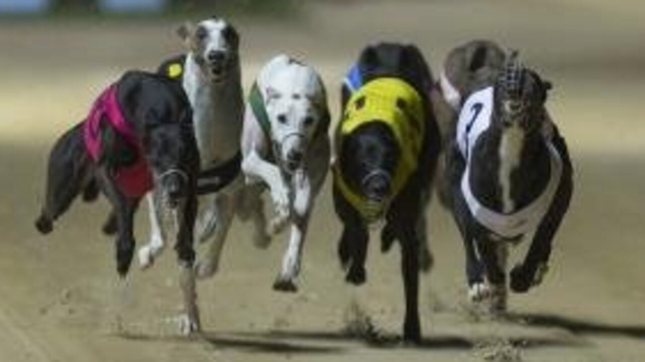 There are 10 races on the program at tonight's Rockhampton greyhound meeting.