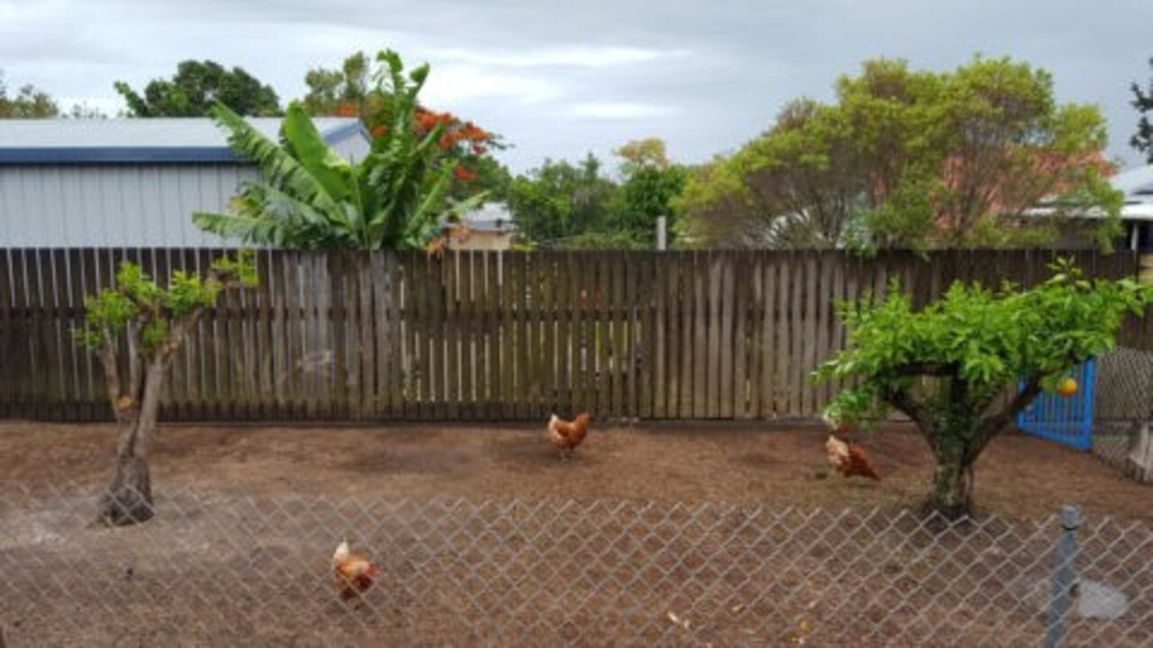 Mackay Police are investigating after four chickens were plucked from their North Mackay home.