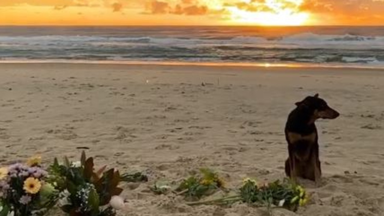 Alex Pullin's adorable dog has created a heartbreaking image waiting at the scene of the Aussie snowboard champion's beach memorial.