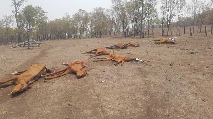 Investigation into deaths of 22 horses completed