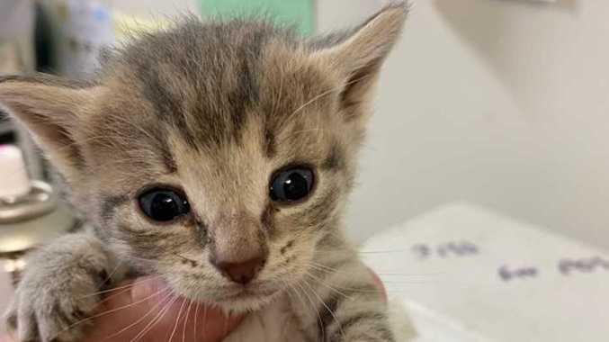Left for dead: Kittens dumped in locked cage