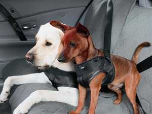 Secure your pooch for the pawfect ride