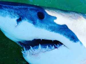 Expert confirms type of shark responsible for fatal attack