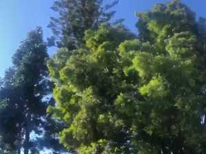 Strong winds, Sunshine Coast