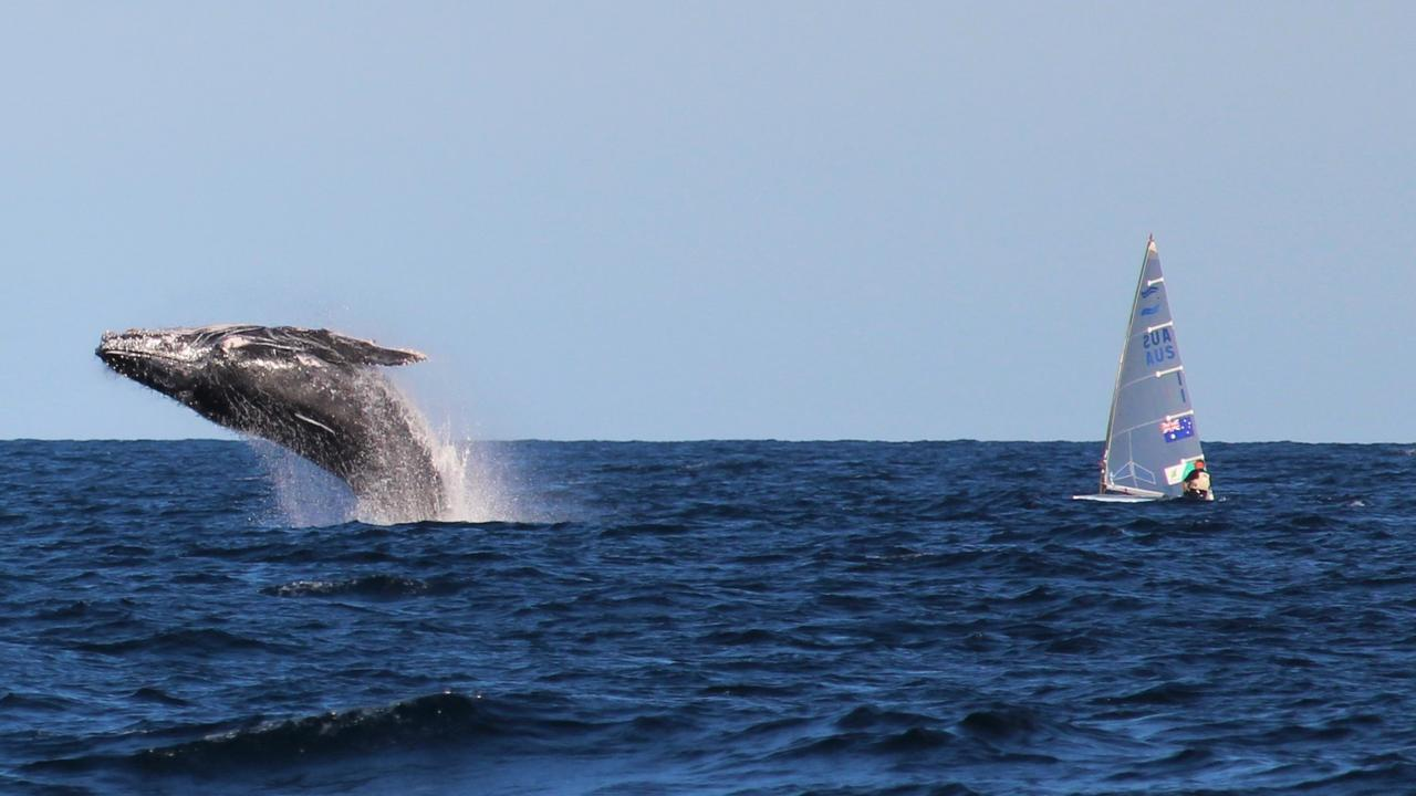 Sailing back from South Solitary Island Kathy Brown captured whales breaching near members of the Australian Sailing Team in town for a training camp.