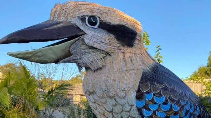 'Laughter is missing': Giant kookaburra could visit CQ