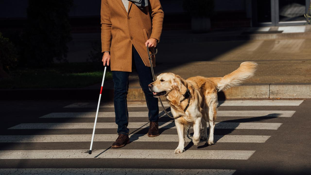 Cropped view of blind man with stick and guide dog walking on crosswalk