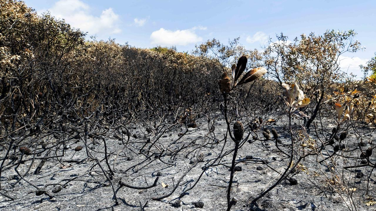Burnt out vegetation near the scene of ignition point of a Peregian Beach bushfire in October 2019. Photo Lachie Millard