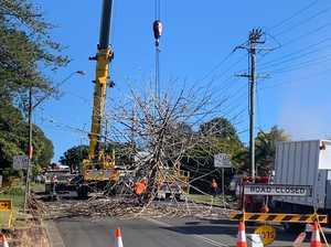 VIDEO: Alstonville's tall tree removed from Main Street