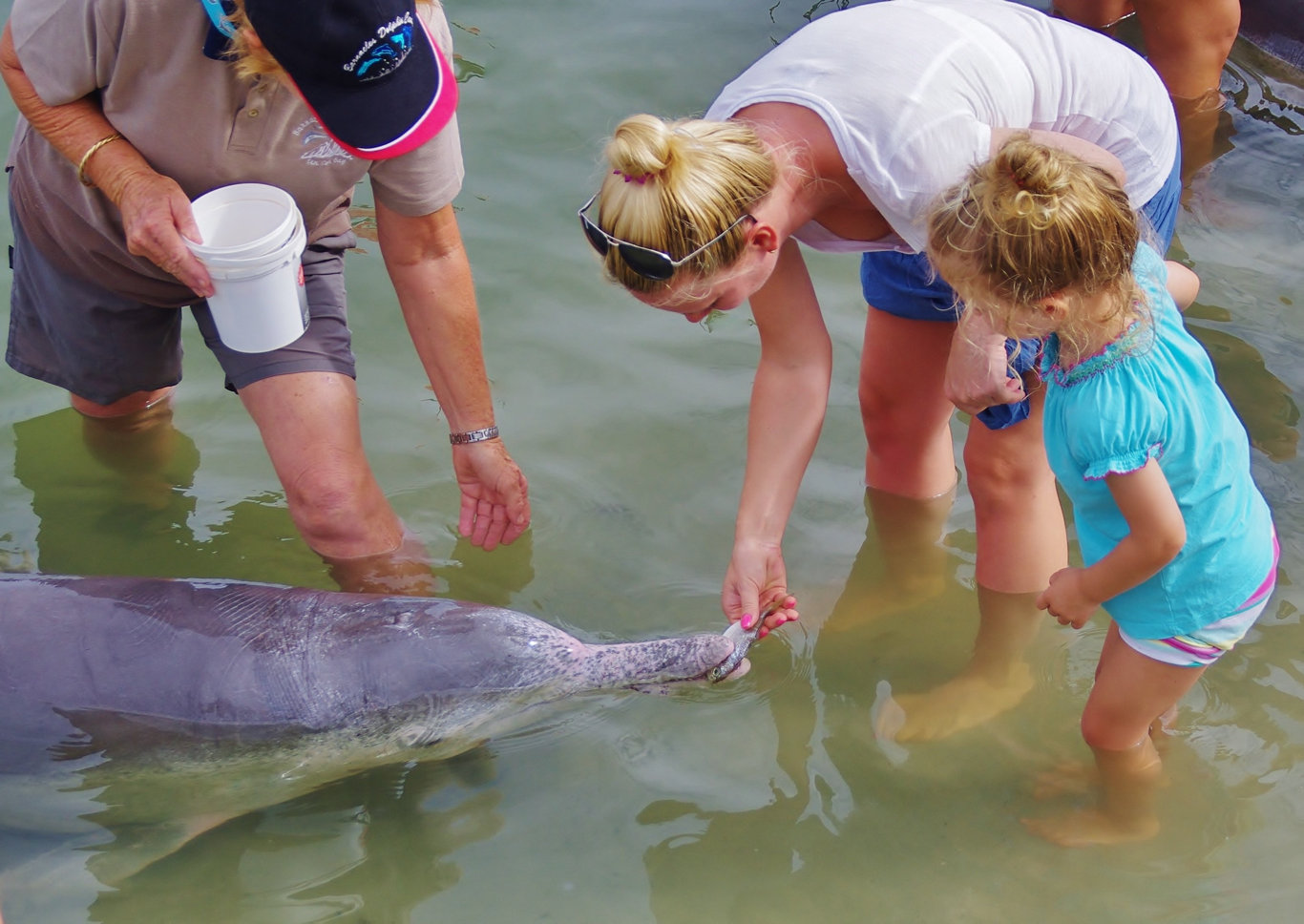Say hello to dolphins Chompy, Squirt or Patch at Tin Can Bay.