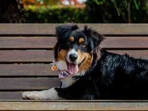 PAW-FECT: Carnival of Flowers launches dog-friendly program