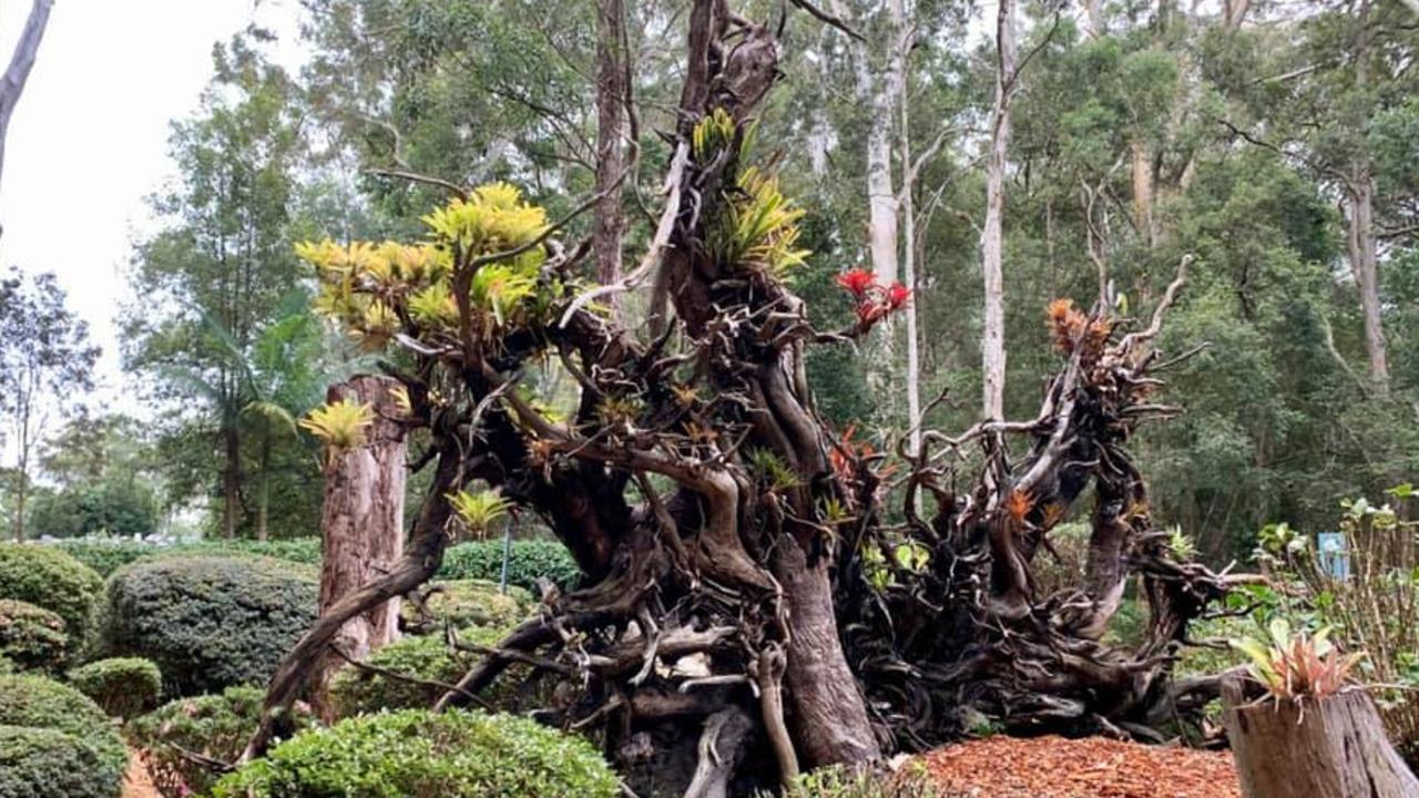 North Coast Regional Botanic Garden. Heather Manson