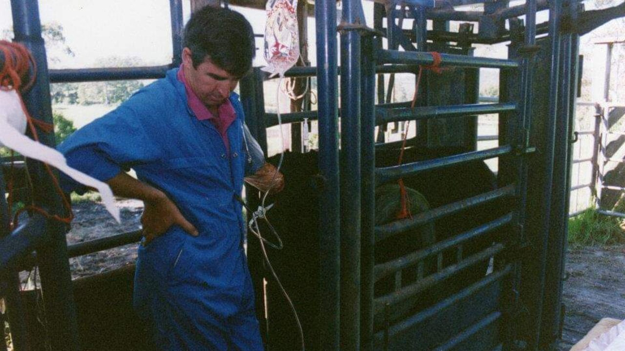 Dr Richard Neagle flushing a cow in Tamworth. Picture: Contributed