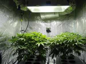 Hydroponic cannabis set-up found during police raid
