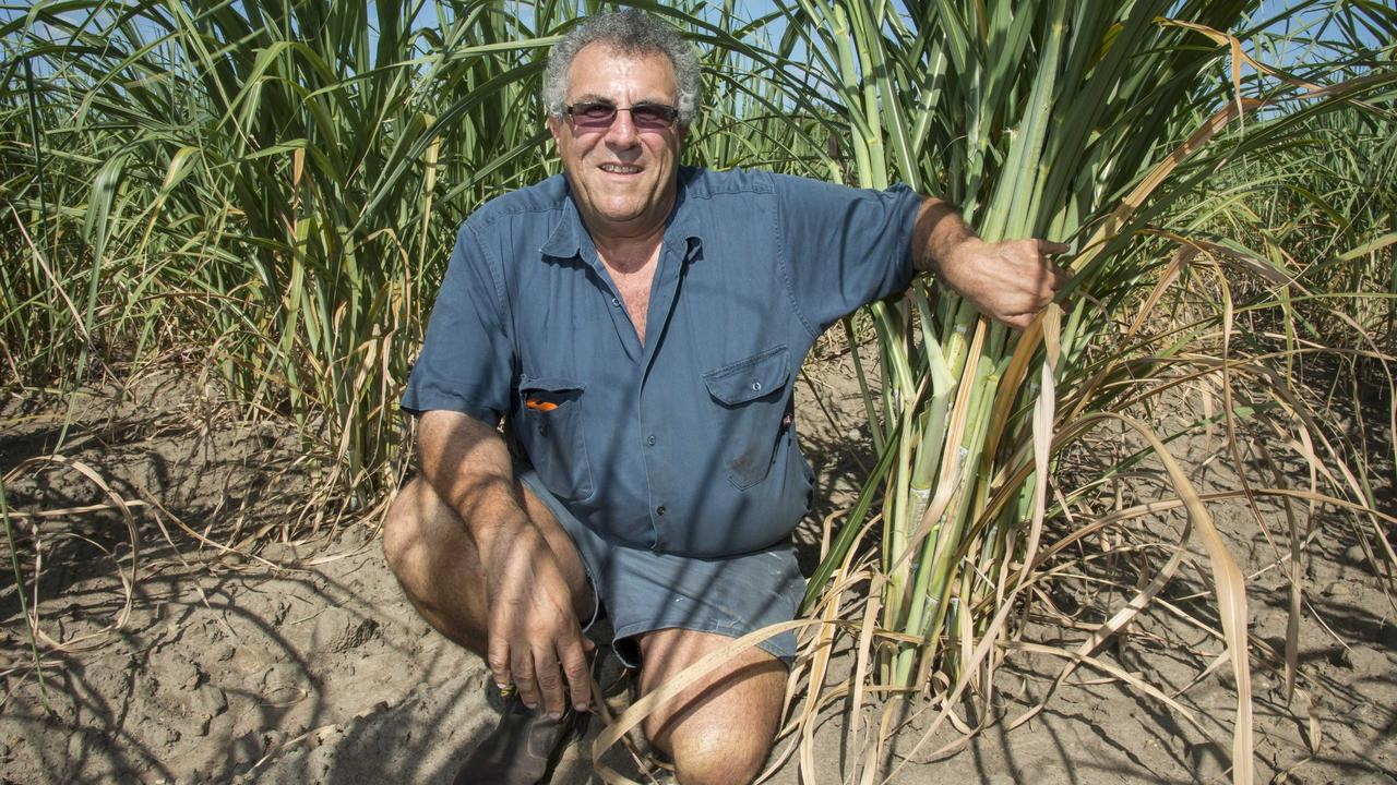 Canegrowers Queensland chairman Paul Schembri. Photo: Contributed.
