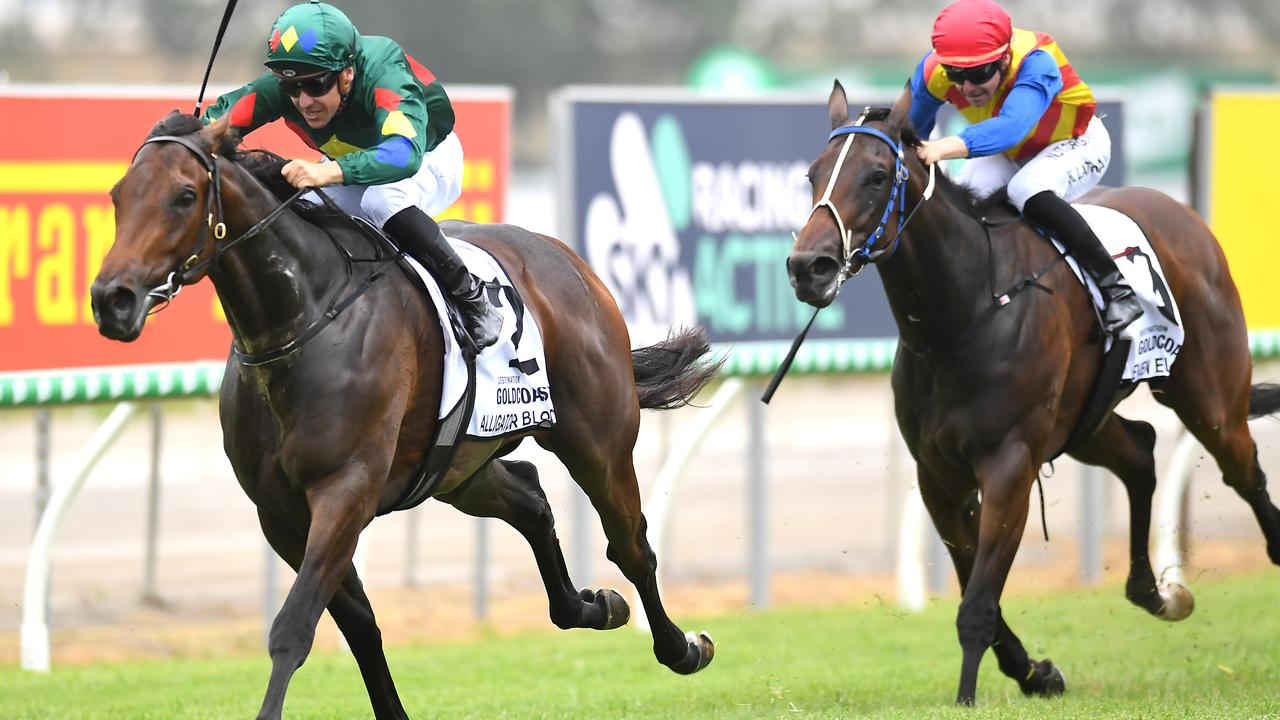 Alligator Blood was a dominant winner on the Gold Coast in January.