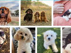 VOTE NOW: Toowoomba's cutest dog for 2020