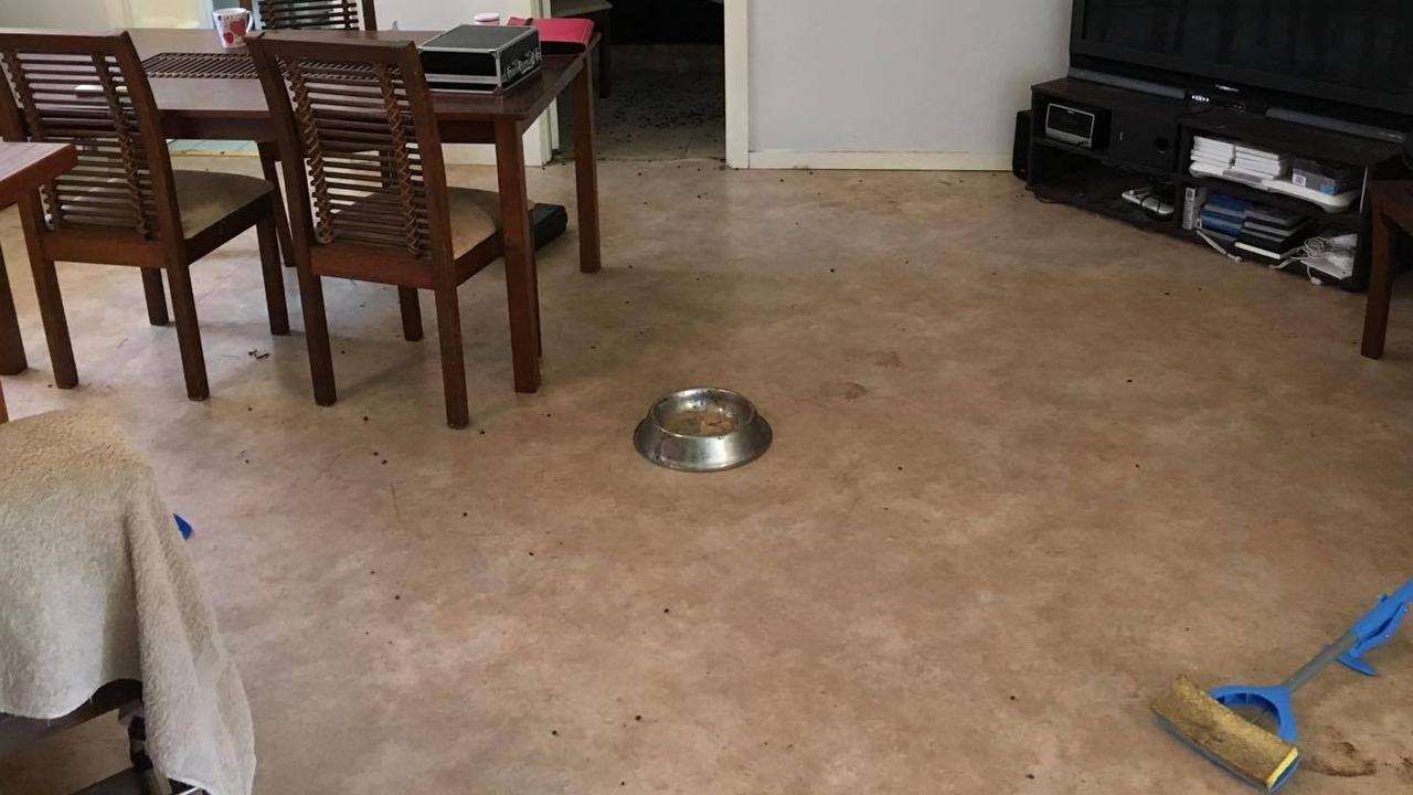 The carpet has been ripped out in an effort to get rid of the smell of goat manure and urine.