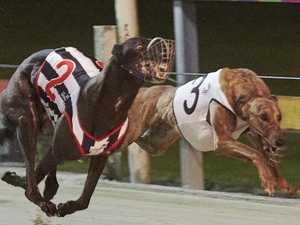 Strong field of dogs set to compete in Red Dog Bonus Final