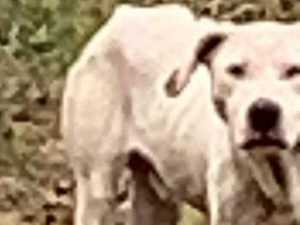FOUND: Mystery dog reunited with owners