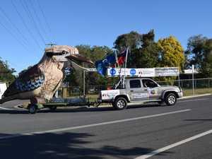 Giant kookaburra visits Tiaro