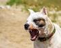 'HORRIFIC ATTACK': $11,000 fine after fatal dog mauling