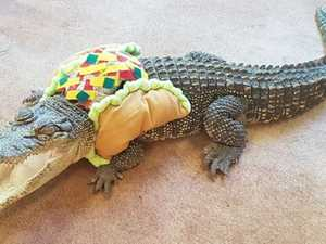 Holy croc-amole: Meet the saltie who likes to dress up