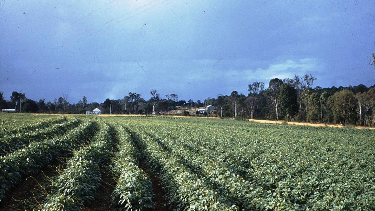 2 - Peanut Farms