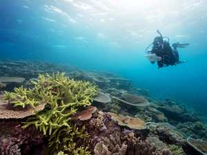 """Impact on reef """"greatly exaggerated,"""" says cane chief"""
