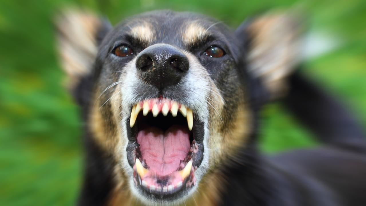 Data released by Mackay Regional Council revealed there were 256 dog attacks in the six months to June.