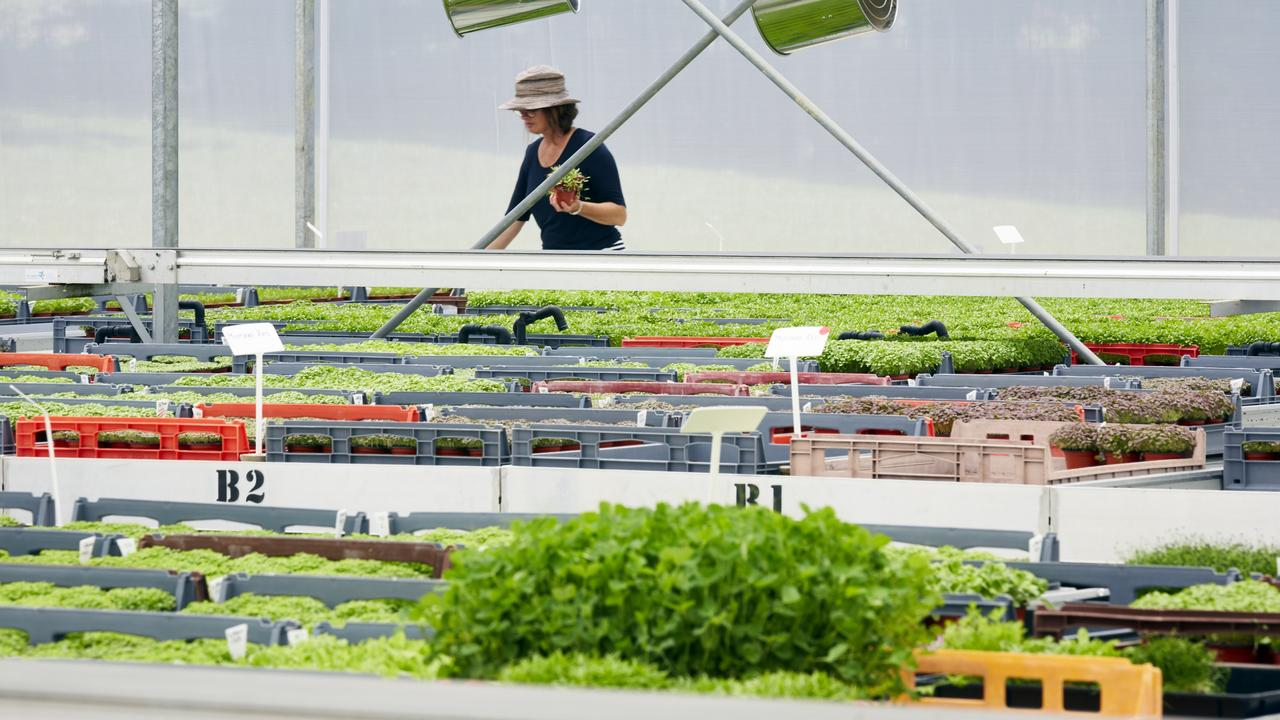 Pocket Herbs grown on the Tweed are available to buy at Coles throughout NSW and Queensland, including Elanora and Miami on the Gold Coast. Picture: Supplied.