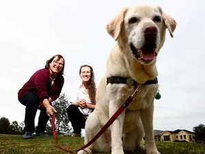 Virus dogs unleashed to sniff out COVID carriers