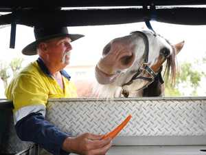 Audit surprises owners, puts future of Clydesdales in doubt