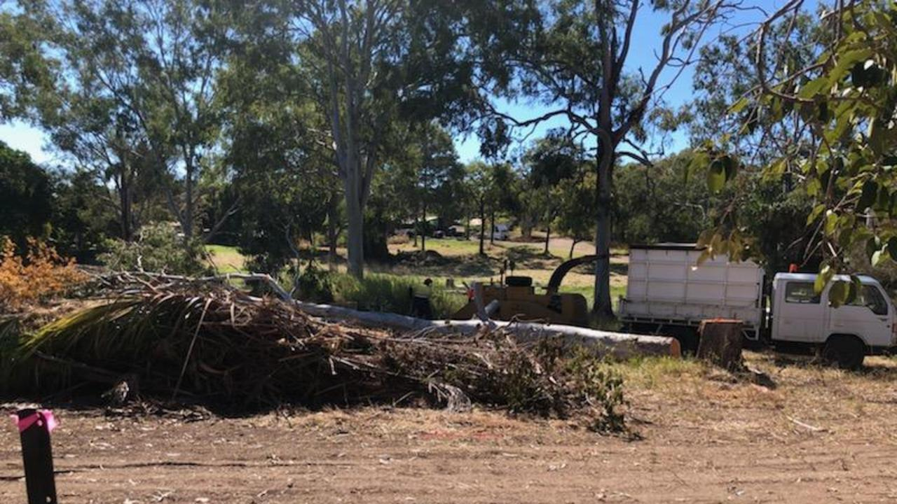 A tree felled by contractors this morning at Agnes Water. Indigenous locals say the trees are on a sacred site and they weren't consulted.