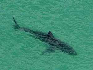 SHARK: Third incident this month in notorious spot