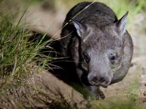 Landholders needed to save species from extinction