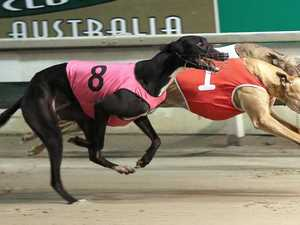 Race is on: Ipswich's auction series to go ahead