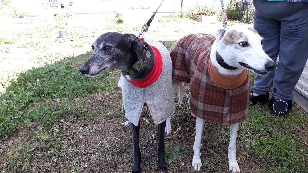 Misty and Bella in their handmade jumpers.