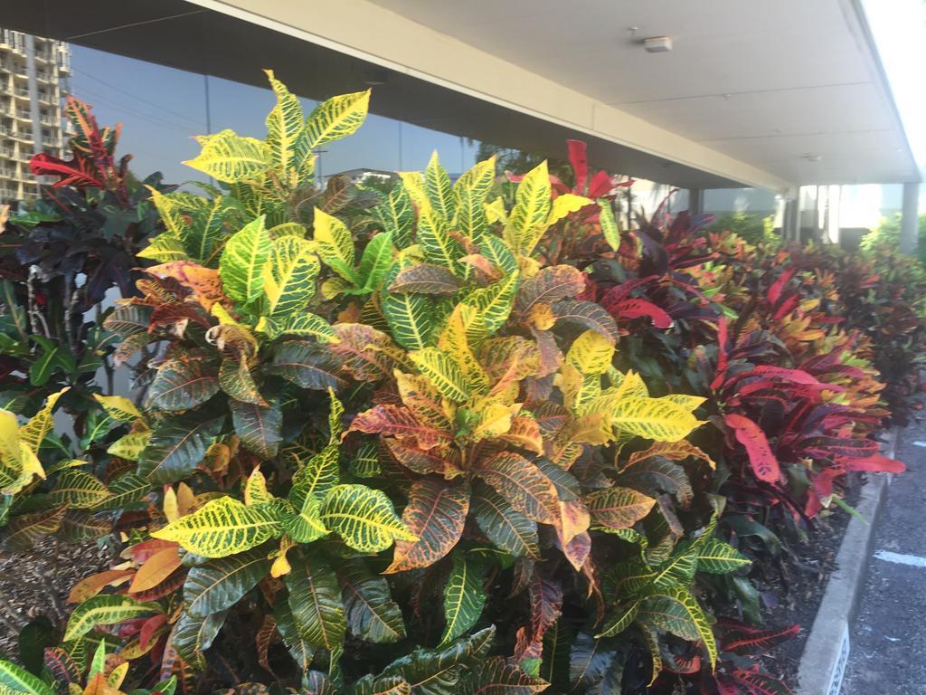 Crotons Darwin