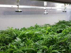 MPs respond to CQ candidate's medicinal marijuana campaign