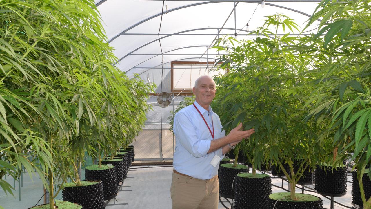GREEN LIGHT: Ken Charteris with medicinal cannabis plants growing in Bundaberg.